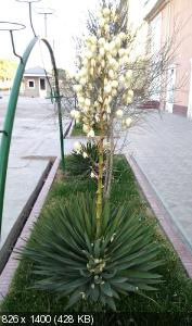 http://i98.fastpic.ru/thumb/2018/1108/47/97262f0fca30c39b642bc9776ae29a47.jpeg