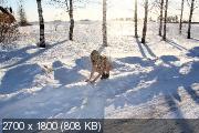http://i98.fastpic.ru/thumb/2018/1118/8d/_14896bd924869a2b75a6f8845dfe408d.jpeg